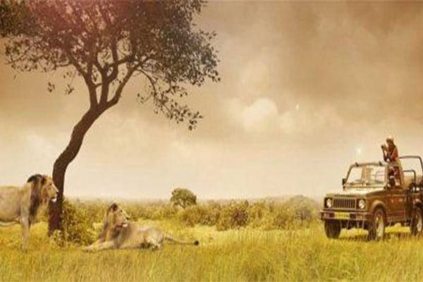 Gir National Park is Best Holiday Place in Gujarat.