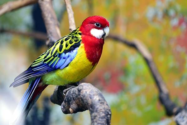 15 Different Types Of Exotic Birds With Images Way2info Com