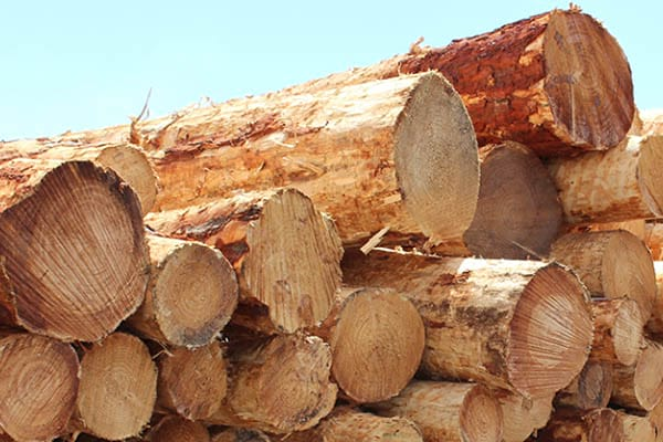 Timber products we get from forest.