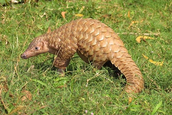 Endangered Species Of Animals In India
