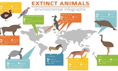 List of Extinct Animals