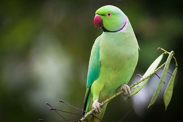 List of Birds That Can Fly Parrots