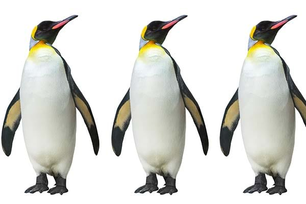 List of Birds That Can't Fly Penguin