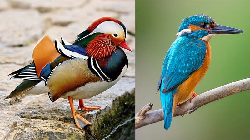 Top 28 List of Water Birds (Aquatic Birds) with Pictures ...