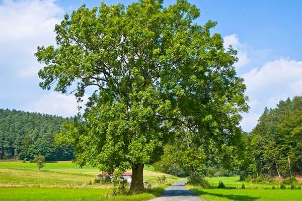 Different Types Of Trees In The World
