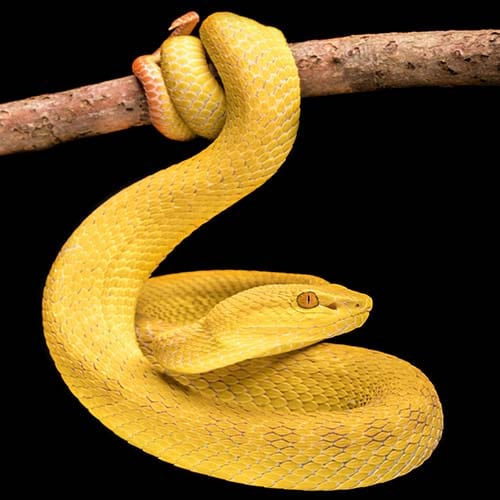 World Poisonous Snake Name