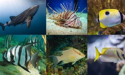 List of Marine Fish