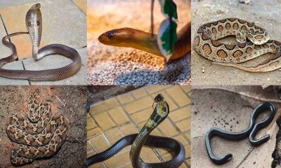different types of snakes in India