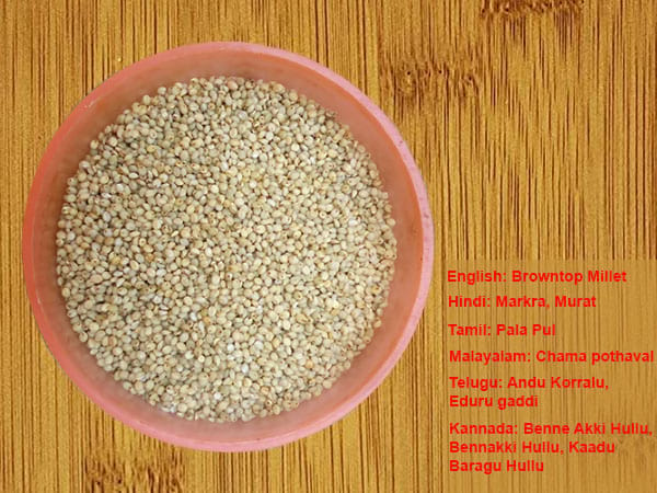 Browntop Millets