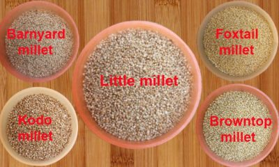 Types Of Millets